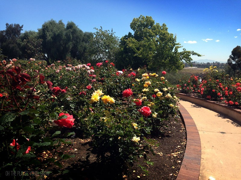 Balboa Park Rose Garden Oh The Places You 39 Ll Grow