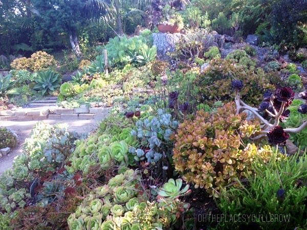 san-diego-botanical-gardens02